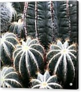 Cactus Glistening Acrylic Print