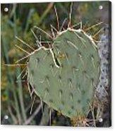 Cactus Heart Acrylic Print