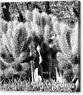 Cactus In Bw Acrylic Print