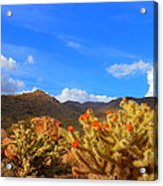 Cactus In Spring Acrylic Print