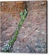Cactus In The Rocks Acrylic Print