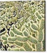 Cactus  Acrylic Print