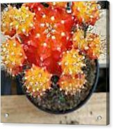 Cactus Orange Acrylic Print