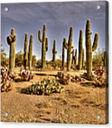Cactus Patch Acrylic Print by George Lenz