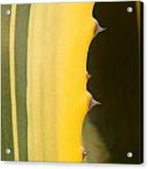 Cactus Spines 1 Acrylic Print