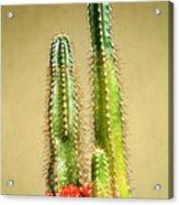 Cactus Towers Acrylic Print