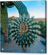 Cactus With A Twist Acrylic Print