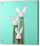 Cactus With Easter Rabbit Decorations Acrylic Print