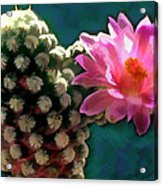 Cactus With Pink Sunlit Bloom Acrylic Print