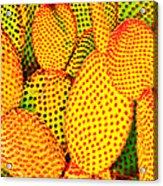 Cactus With Sunset Glow Acrylic Print