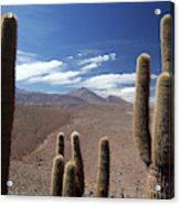 Cactus With The Andes Mountains Acrylic Print