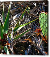 Cactuscomp2 2009 Acrylic Print