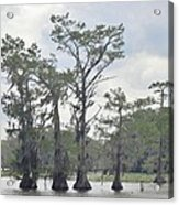 Caddo Lake Cypress Trees Acrylic Print