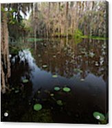 Caddo Lake, Texas's Largest Natural Lake Acrylic Print