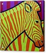 Cadmium Zebra Acrylic Print