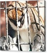 Caged But Strong Acrylic Print