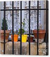 Caged In Acrylic Print