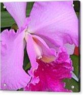 Cahleya Orchid Acrylic Print