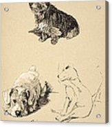 Cairn, Sealyham And Bull Terrier, 1930 Acrylic Print