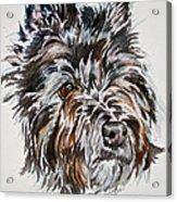 Cairn Terrier Martha Acrylic Print