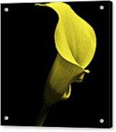 Cala Lilly Vi Acrylic Print