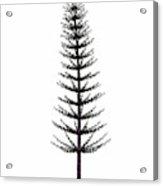 Calamites Prehistoric Tree Acrylic Print