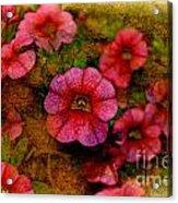 Calibrachoa Photoart I  Acrylic Print