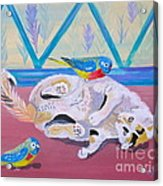Calico And Friends Acrylic Print