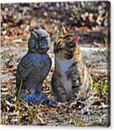Calico Cat And Obtuse Owl Acrylic Print by Al Powell Photography USA