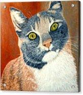 Calico Cat Acrylic Print