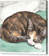 Calico Cat Sleeping Watercolor Portrait Acrylic Print