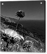 California - Big Sur 002 Acrylic Print