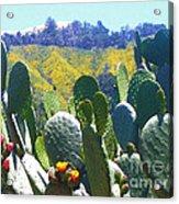 California Big Sur Flowers Acrylic Print