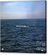 California Blue Whale Acrylic Print