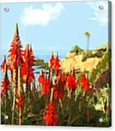 California Coastline With Red Hot Poker Plants Acrylic Print