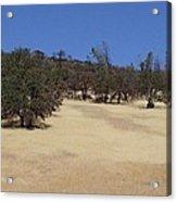 California Grass And Oak Trees Acrylic Print
