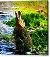 California Hare - 0297 Acrylic Print