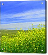 California In Spring Acrylic Print