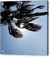 California Palm Acrylic Print