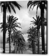 California Palms - Black And White Acrylic Print