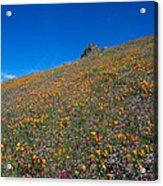 California Poppies Baby Blue Eyes And Owl Clover Acrylic Print