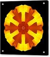 California Poppy Flower Mandala Acrylic Print by David J Bookbinder
