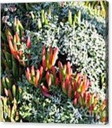 California Seaside Garden Acrylic Print