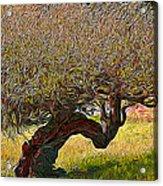 California Summer Oak Acrylic Print