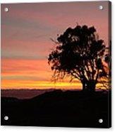 California Tree At Sunset Acrylic Print