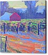 California Vineyard Acrylic Print