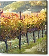 California Vineyard Series Morning In The Vineyard Acrylic Print