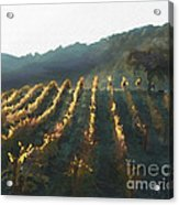 California Vineyard Series Wine Country Acrylic Print