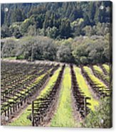 California Vineyards In Late Winter Just Before The Bloom 5d22051 Acrylic Print