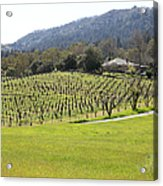 California Vineyards In Late Winter Just Before The Bloom 5d22073 Acrylic Print